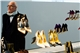 ny_fashion_week_manolo_blahnik_upr